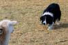 Hotchkiss Sheep Camp Stock Dog Trials
