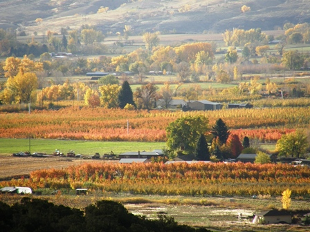 North Fork Valley Autumn Orchards