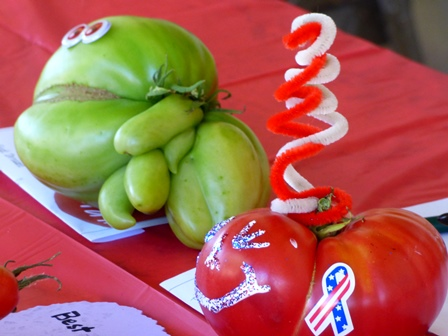 Ugly and Best Dressed Tomato Contest Entries at Annual Tomato Festival
