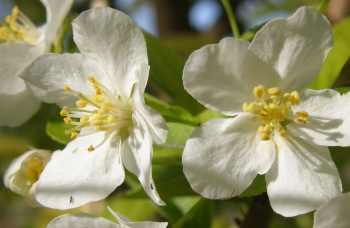 You can plan your North Fork Valley trip to see orchards blooming in springtime.